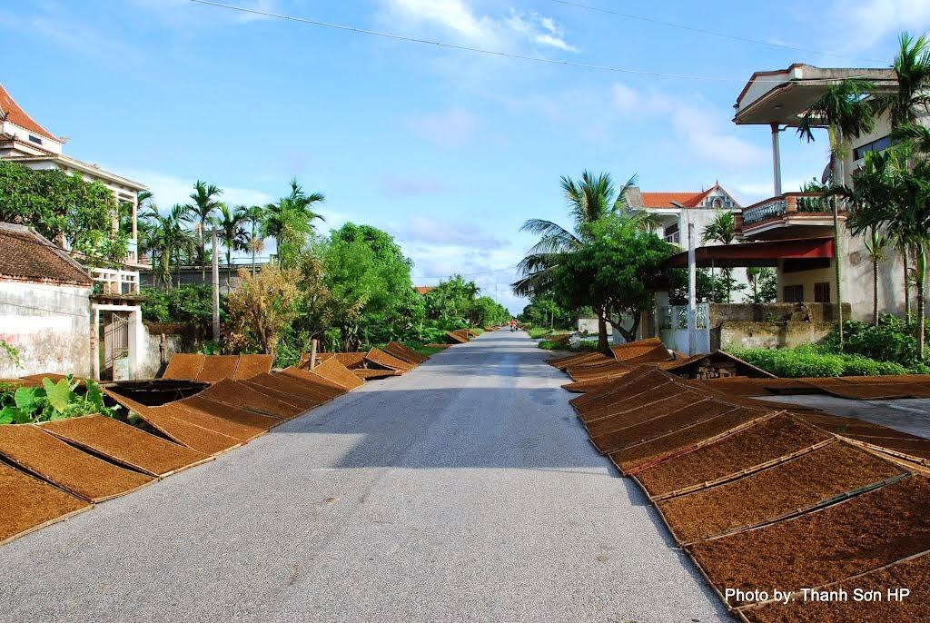 con đường tại xã hai bên đường được dành cho phơi thuốc lào